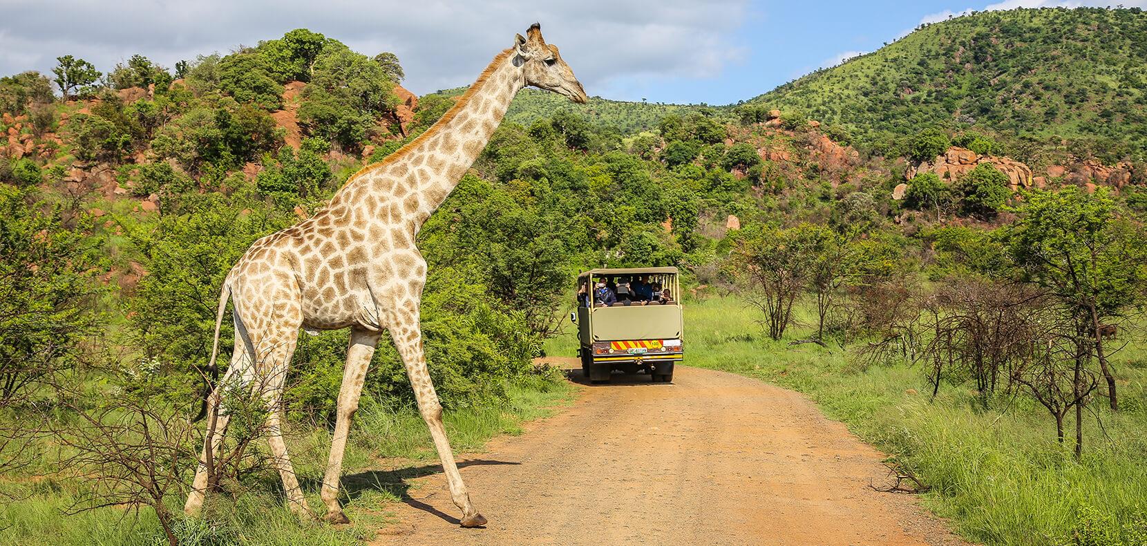 Voyage Safari en Afrique du Sud
