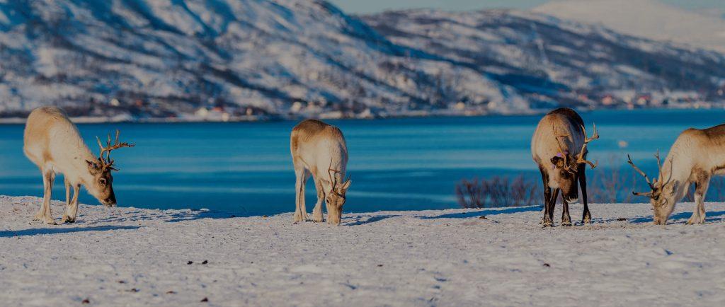 Voyage d'entreprise en Laponie