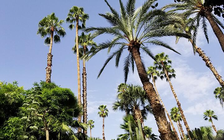 Paysage palmiers