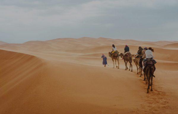 Traverser du désert en chameaux