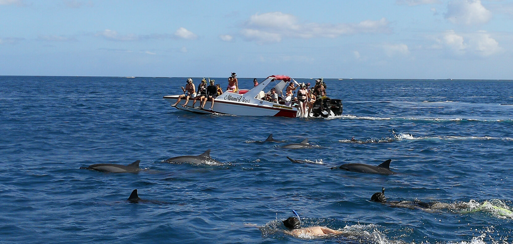 Speed boat avec dauphins
